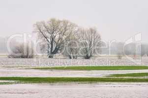 Elbe Hochwasser - river Elbe flood 01