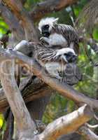Monkeys on the branches
