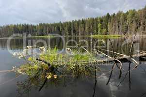 Wunderschöner Natursee mitten in den Wäldern