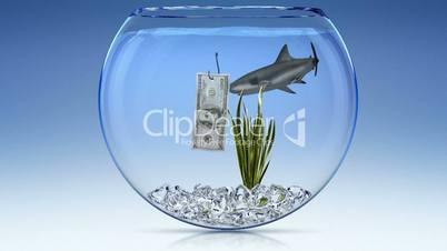 Financial shark