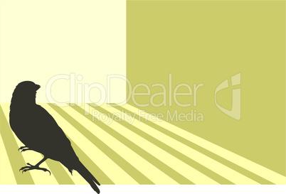 Canary bird 03