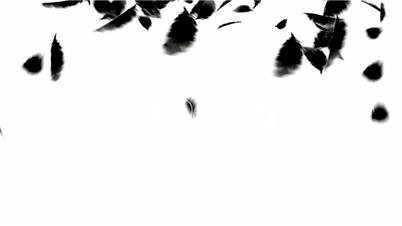 black bird feathers falling.feathers fossil,plastic,duck,velvet,wool,bird flu,poultry,chickens,ducks,geese,animals,particle,Design,pattern,symbol,dream,vision,idea,creativity,vj,beautiful,decorative,mind,Game,modern,stylish,dizziness,romance,romantic,tech