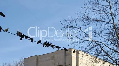 Pigeons resting on electricity cable near tree in the city