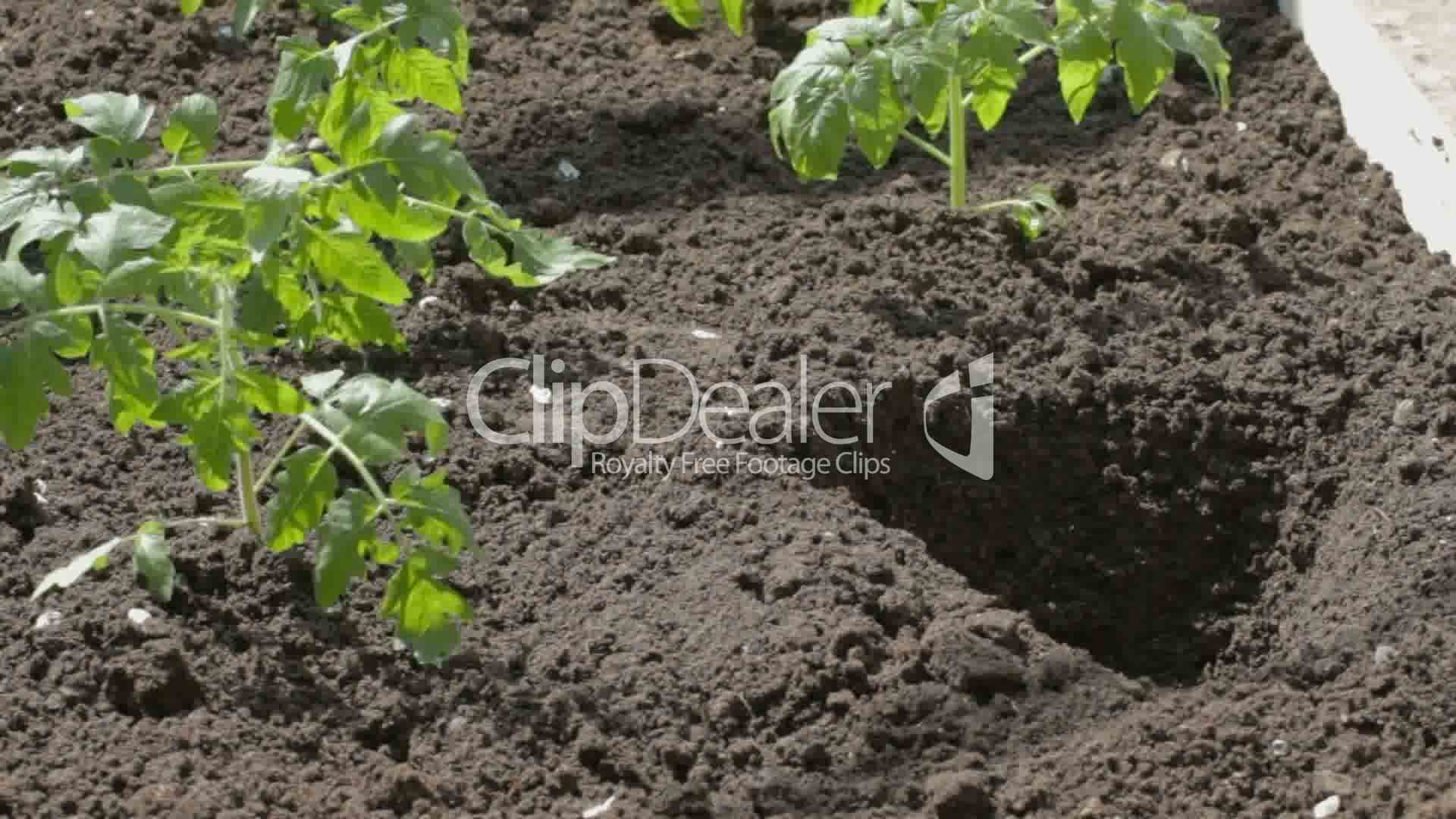 black soil Black soil music 204 likes what you know, or may not know is that good things grow from black soilplant a seed and watch what may come of.