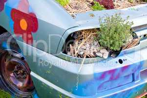 Wrecked Car with Plants