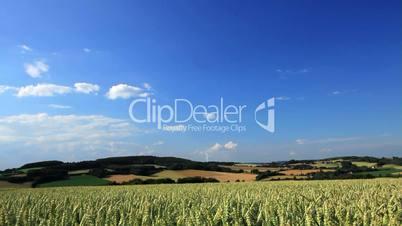 Getreidefeld und blauer Himmel