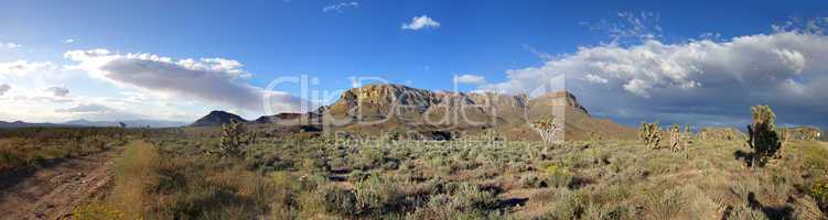 Panorama of american prairie with Joshua trees
