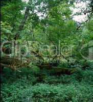 Rain Forest, Washington