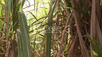 Vegetation in Mauritius