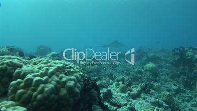 Fische und Korallen