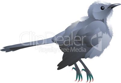 cute little grey bird