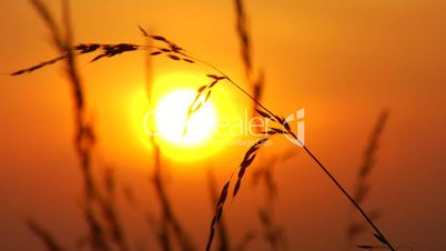 Sonnenuntergang mit Gräsern im Vordergrund