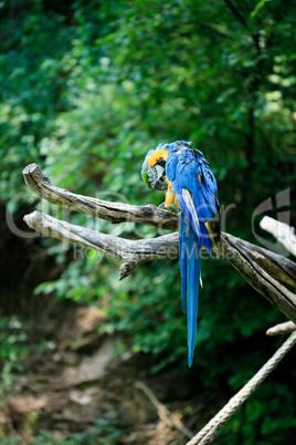 macaw sitting on a branch