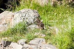 gray bird standing on a rock