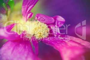 Blick auf den Blütenkelch einer lila Pflanze