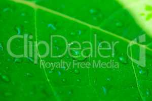 drop on green leaf