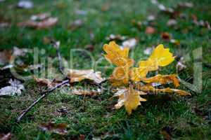 Background leaves on grass