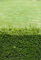 background of green shrubs