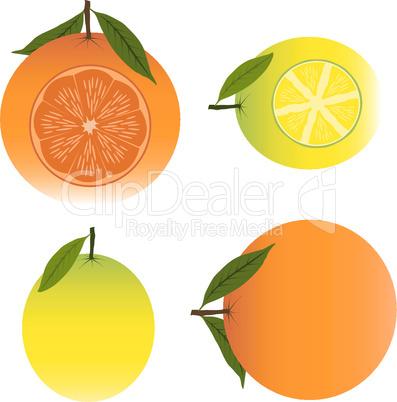 Oranges and Lemons Vector Illustration