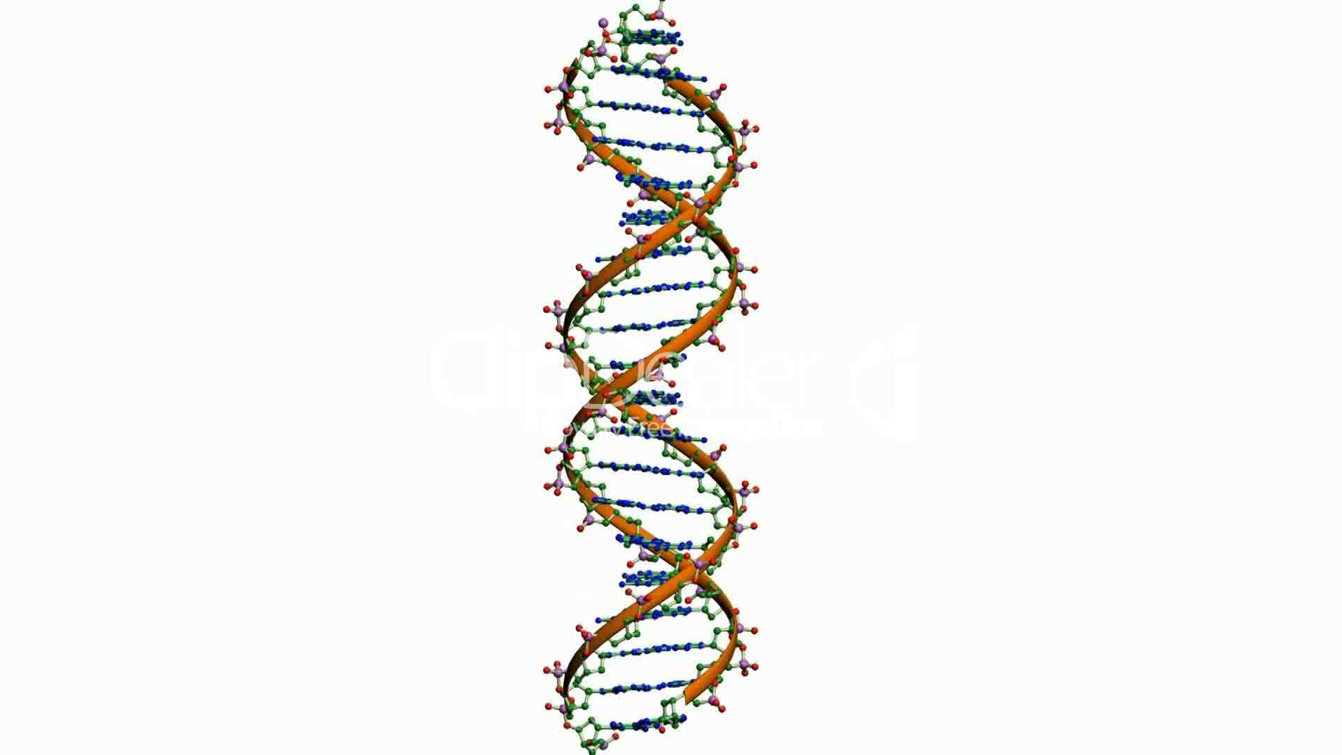 Rotation of 3D DNA.medicine,biology,science,research ...