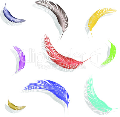 colored feathers collection