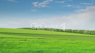 loop of green field. Time lapse HD