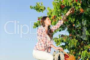 Cherry tree harvest summer woman sunny countryside