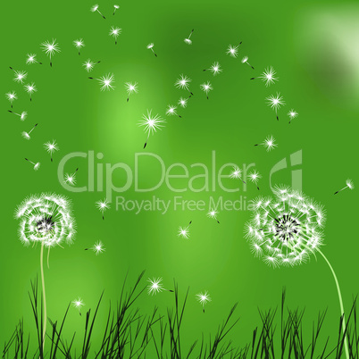 Green love background, dandelion.