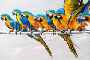 Parrot birds