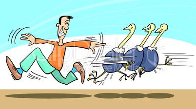 man and ostriches cartoon