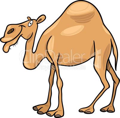 dromedary camel cartoon
