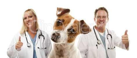 Jack Russell Terrier and Veterinarians Behind