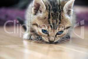 Baby cat sniff