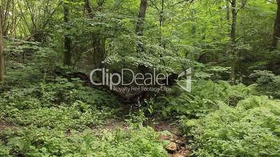 Summer deciduous forest panning - jungle background