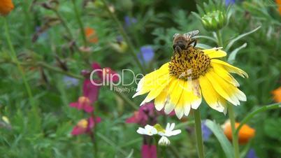 Biene auf Blume