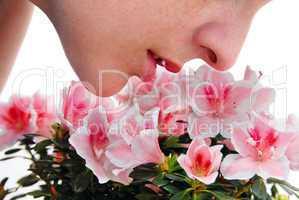 Smelling pink Azalea flowers