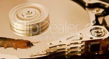 worm on hard disk