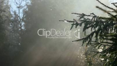 Nebel mit Sonnenstrahlen