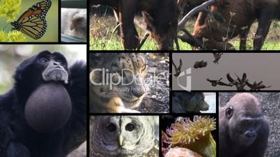 Animal Montage 3