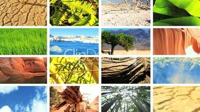 Montage Images of Tropical Vegetation & Barren Environments