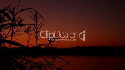 Starnberger See: Gräser in der Abenddämmerung