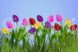Tulpen auf der Wiese