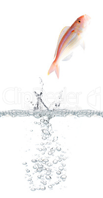 Fish escaping
