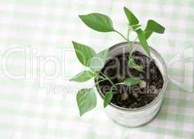 A small plant in a tin can