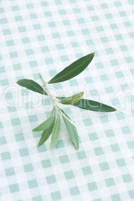 Olive tree twig
