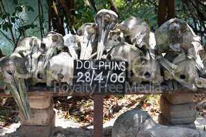 Zanzibar, Nungwi: beached dolphins