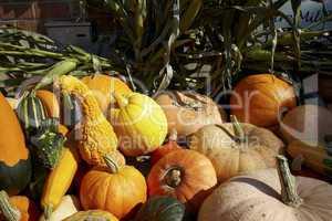 Kürbis-Ernte auf Anhänger - Many different pumpkins for sale on trailer