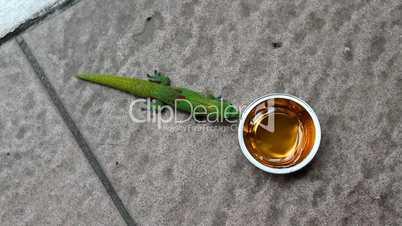Gecko Snack