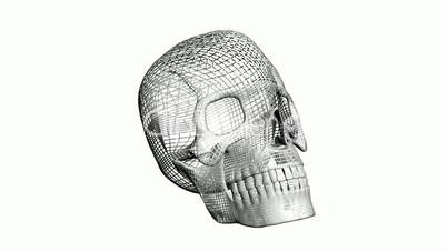Rotation of 3D Skull.bone,death,skeleton,illustration,design,dead,Grid,mesh,sketch,structure,