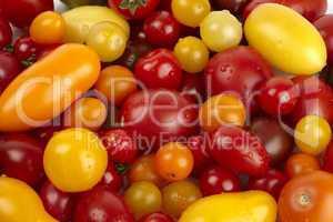 Viele frische verschiedene Bio Tomaten mit Wassertropfen - Many different fresh organic tomatoes with water drops